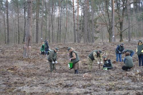 Державні службовці та депутати Волині садили ліс