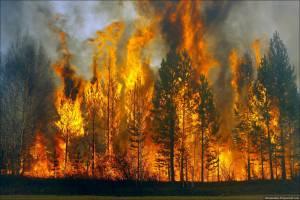 Впроваджують автоматизовану систему «Пожежі»