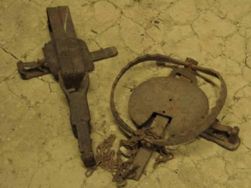 Використання капканів на полюванні у Галичині XVI – початку ХХ ст. (закінчення)