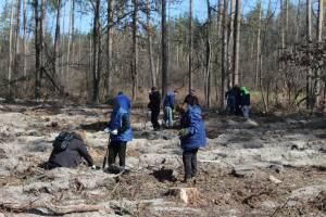 Держлісагентство не зможе висадити мільйон дерев і виконати Украз Президента?