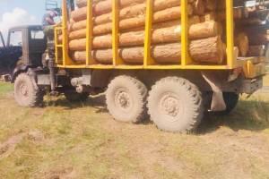 Де опиняється незаконно зрубана деревина
