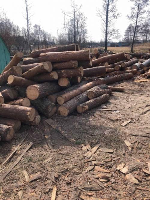 Де беруть крадену деревину?