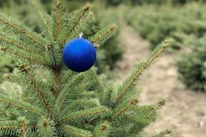 Про новорічні ялинки лісівники Волині піклуються цілий рік