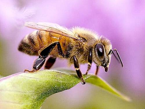 """Створимо """"рій"""" голосів і захистімо комах планети!"""